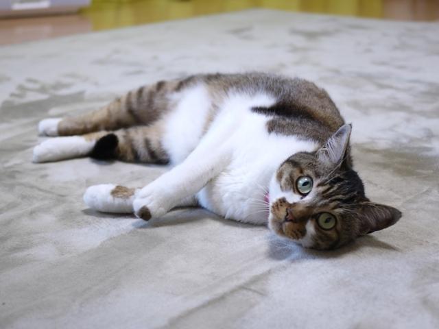 猫のお留守番 ハッピーくん編。_a0143140_22320161.jpg