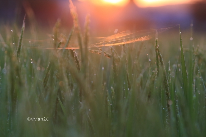 早朝の蓮撮影 ~涼しいうちに撮影しましょう~_e0227942_21314670.jpg