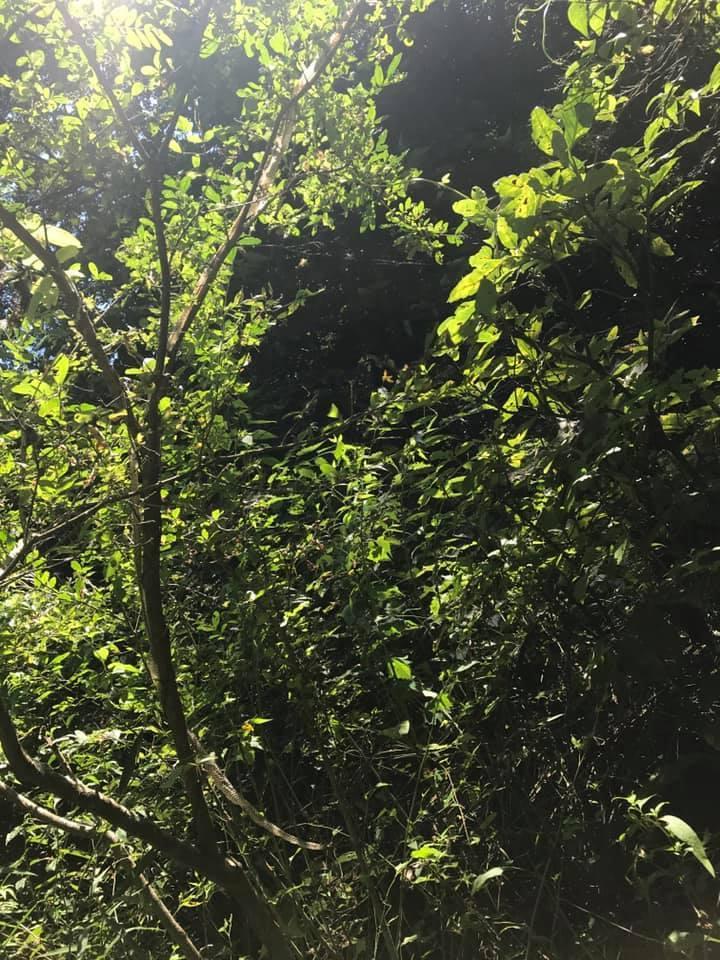 特別もりのこ 川上り清掃 : 森のようちえん 葉山 「もりのわ」