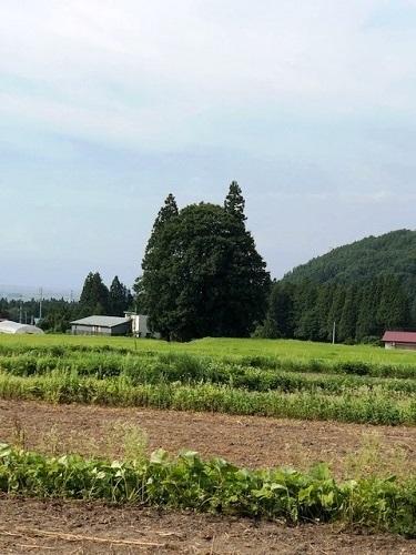 米沢観光_e0211357_15000271.jpg