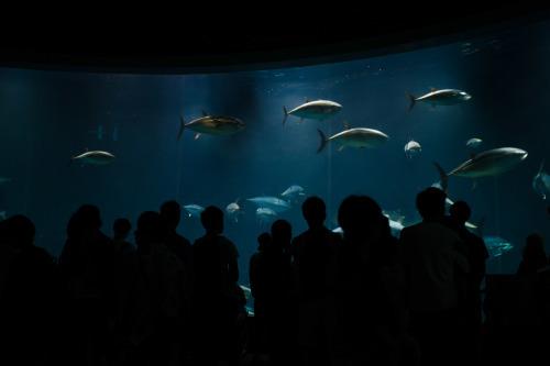 2019/07 葛西臨海公園/水族館_c0098759_15401284.jpg