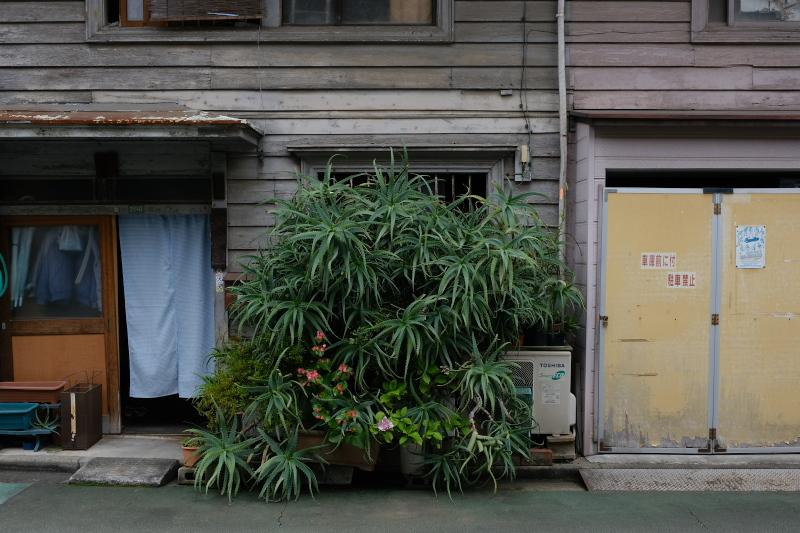 東京の坂道 #37-2 根津神社参道_f0079061_19013280.jpg