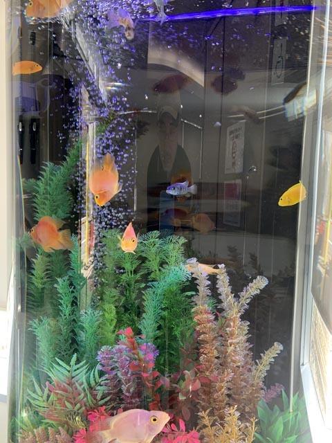 熱帯魚で時間つぶし_e0133780_22113076.jpg