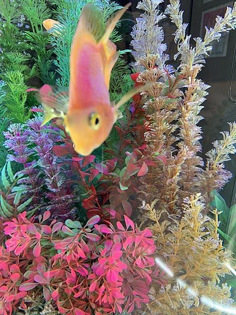 熱帯魚で時間つぶし_e0133780_22131397.jpg