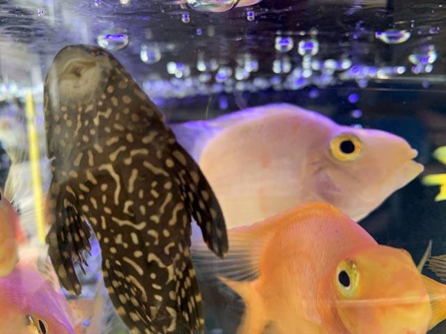 熱帯魚で時間つぶし_e0133780_22154935.jpg