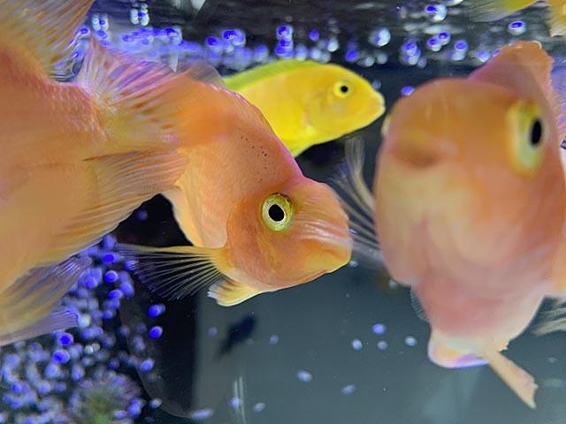 熱帯魚で時間つぶし_e0133780_22162567.jpg