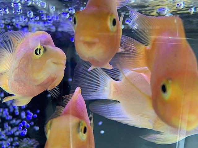 熱帯魚で時間つぶし_e0133780_22171612.jpg