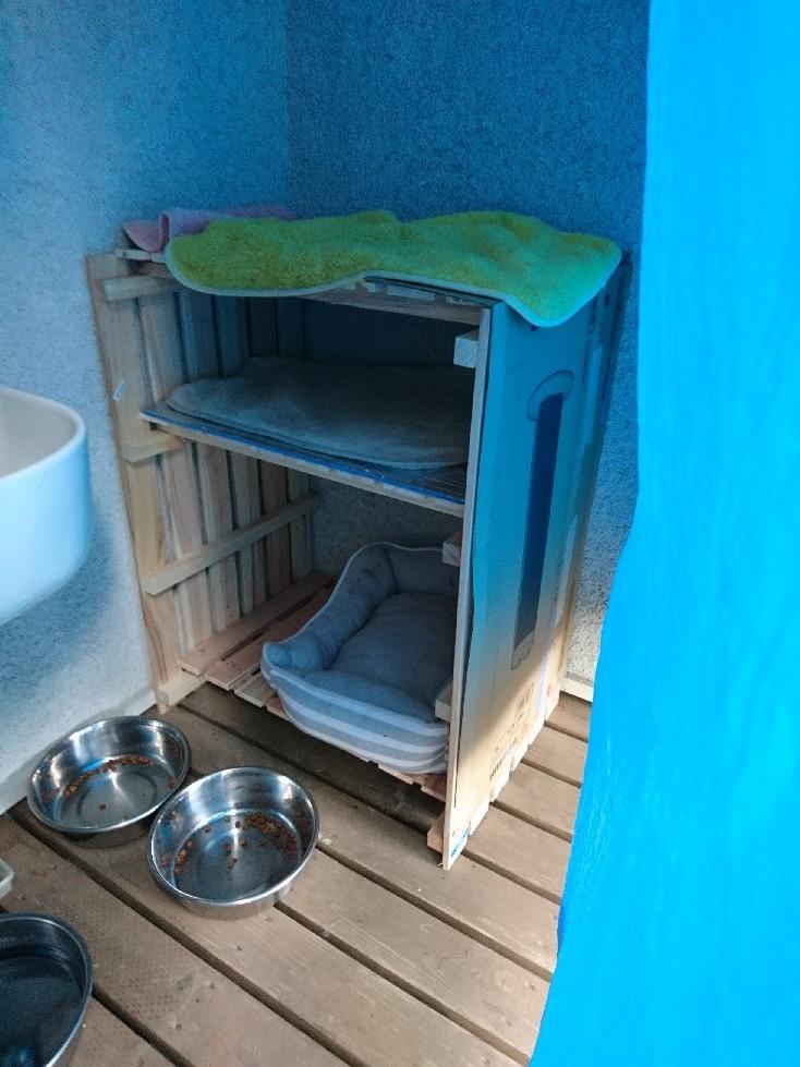 外の猫さんの寝床_f0197985_16370583.jpg