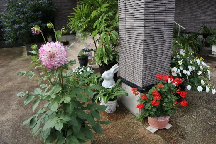 8月中旬ですが 7月の庭です_f0067514_15083095.jpg