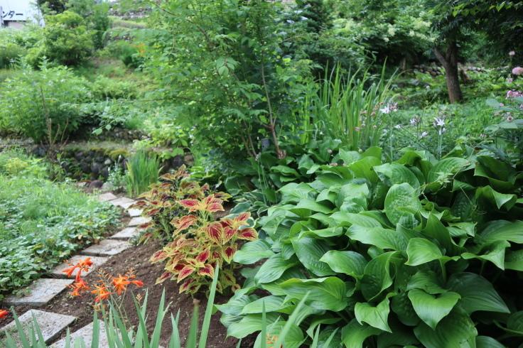 8月中旬ですが 7月の庭です_f0067514_15090853.jpg