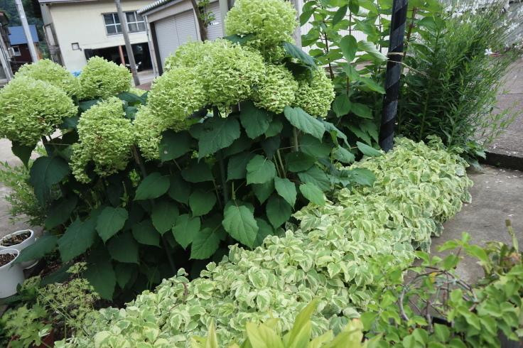 8月中旬ですが 7月の庭です_f0067514_15191251.jpg