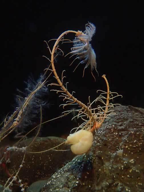 葛西臨海水族園:深海の生物①~五億年の時を超えて、「生きた化石」トリノアシ_b0355317_20224587.jpg
