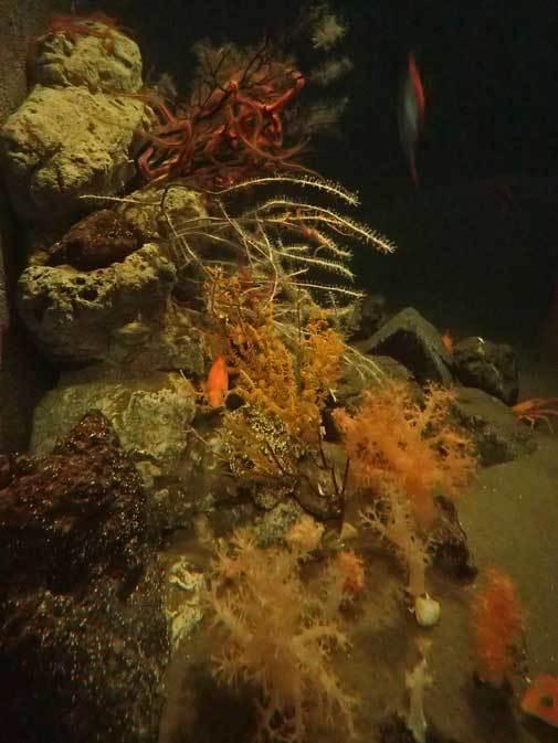 葛西臨海水族園:深海の生物①~五億年の時を超えて、「生きた化石」トリノアシ_b0355317_20263025.jpg