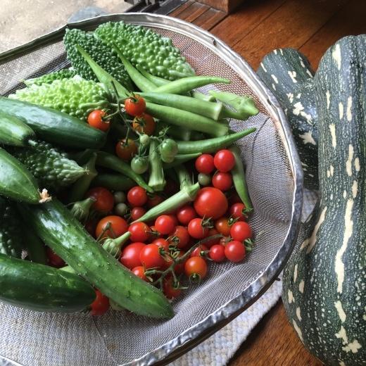 実家の野菜たち_f0229521_08320369.jpeg