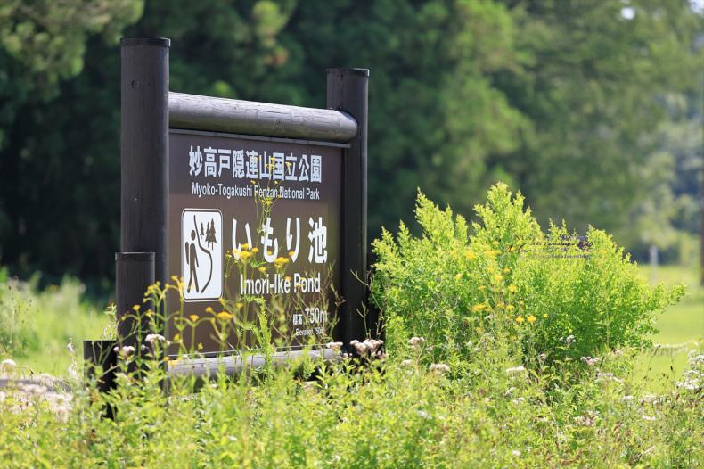 まゝに/妙高戸隠連山国立公園2 いもり池_d0342426_01435739.jpg