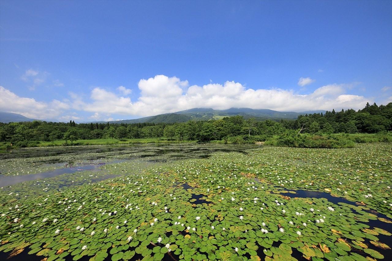 まゝに/妙高戸隠連山国立公園2 いもり池_d0342426_01442526.jpg