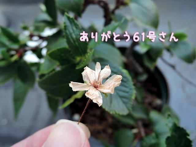 台風クロさん_c0062832_16093333.jpg