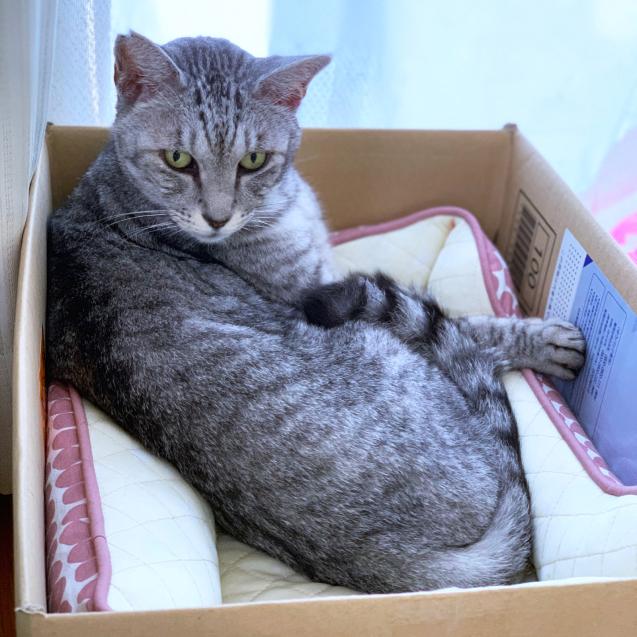 猫ベッドへのこだわり_d0355333_22445331.jpg