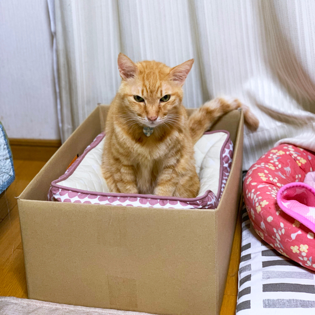 猫ベッドへのこだわり_d0355333_22445811.jpg