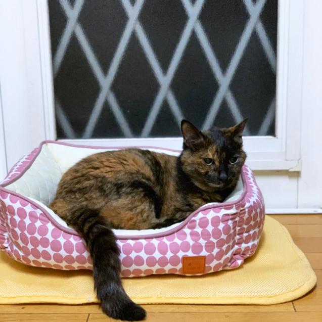 猫ベッドへのこだわり_d0355333_22445949.jpg