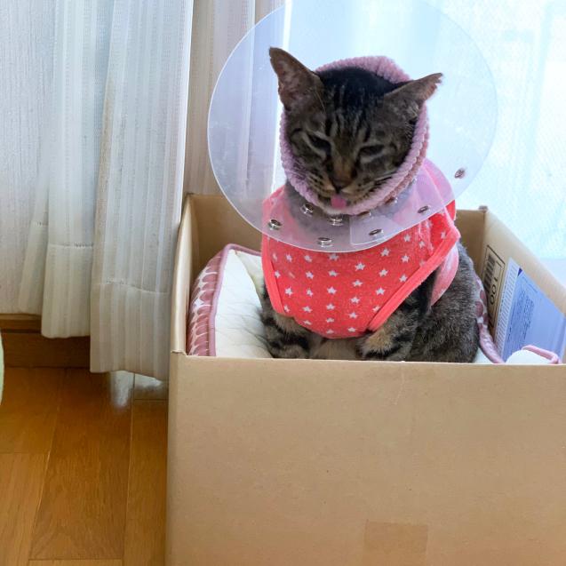 猫ベッドへのこだわり_d0355333_22462230.jpg