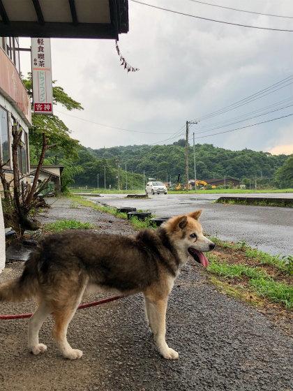 葛尾村&浪江町の給餌同行 #13_c0009934_19580943.jpg