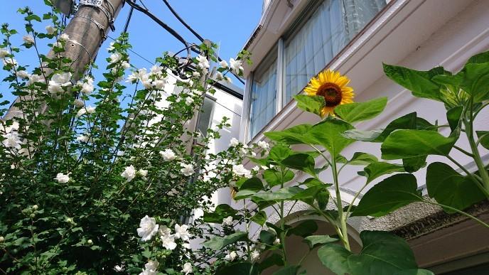 自由が丘の夏の風景を見ながら_d0155439_00144495.jpg