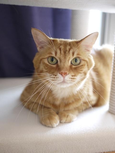 猫のお留守番 きなこくん編。_a0143140_23494589.jpg