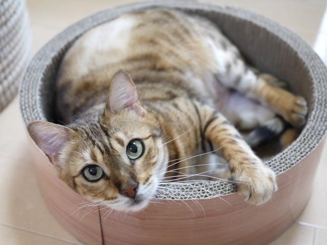 猫のお留守番 ミツコちゃん編。_a0143140_23562001.jpg