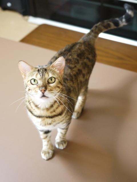 猫のお留守番 スミエちゃん編。_a0143140_23581275.jpg
