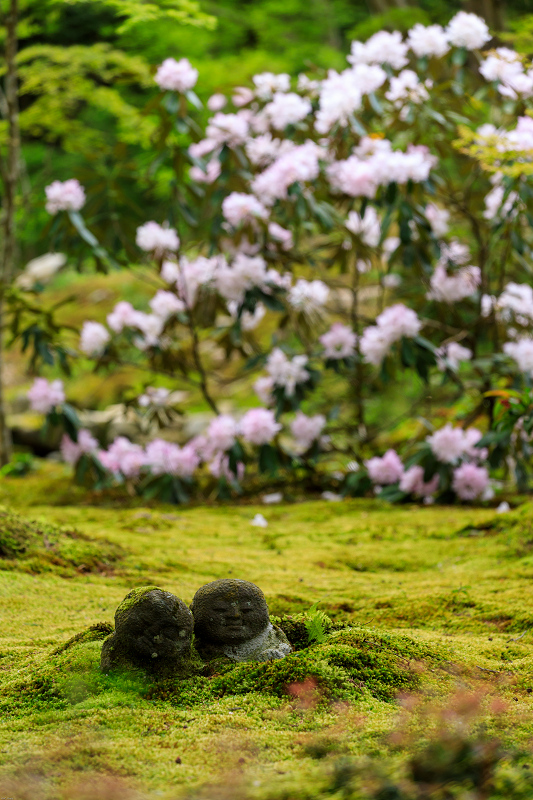 石楠花咲く三千院(後編・有清園~奥の院)_f0155048_1854175.jpg