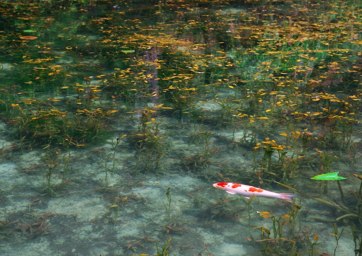 モネの池 2_f0018464_21091137.jpg