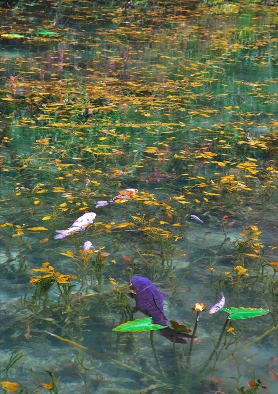 モネの池 2_f0018464_21091155.jpg