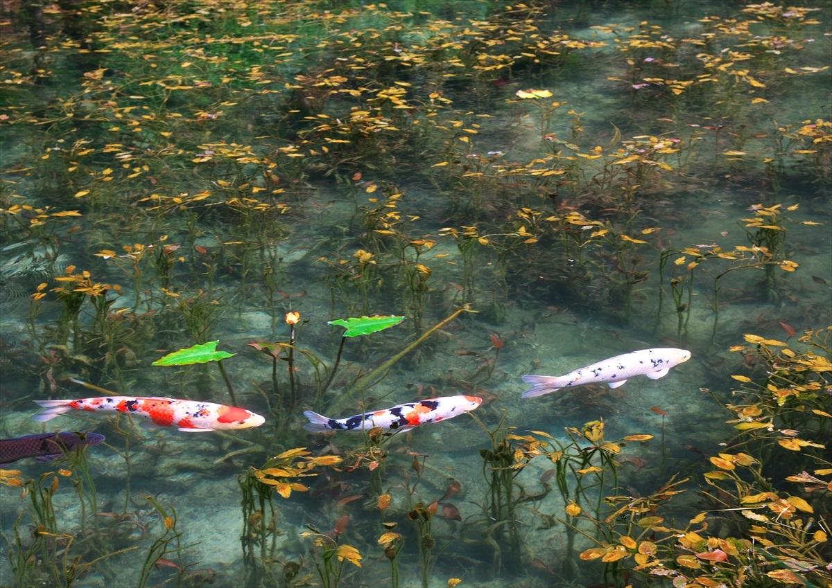 モネの池 2_f0018464_21442357.jpg