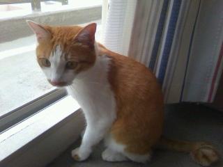 猫の世話にも忙しい夏休み_f0291565_10002558.jpg