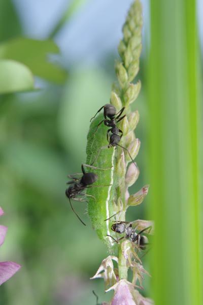 蟻と共に -1-_e0167571_12394583.jpg
