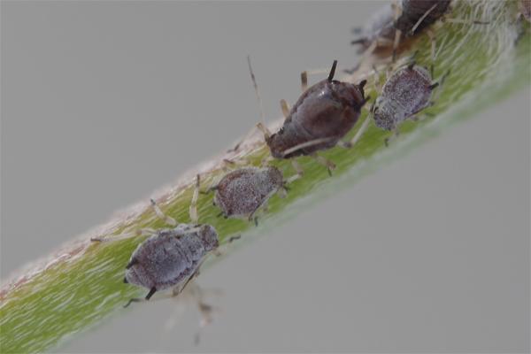 蟻と共に -1-_e0167571_12403592.jpg