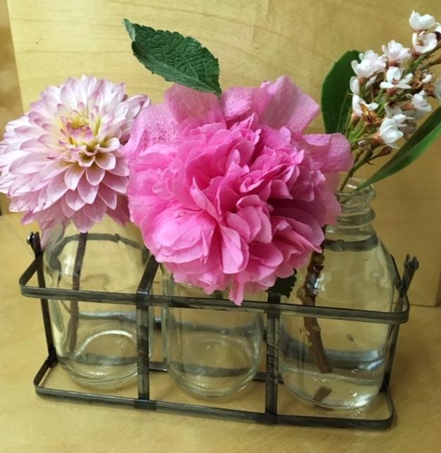 最近の庭ー紫陽花、フォックスグローブ復活_e0350971_13260343.jpg