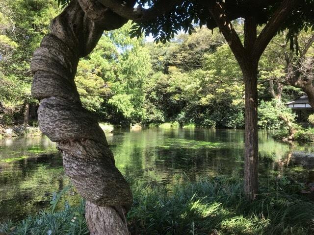 静と動、今日はめっちゃ久しぶりに静の日としました_b0391788_07114813.jpeg
