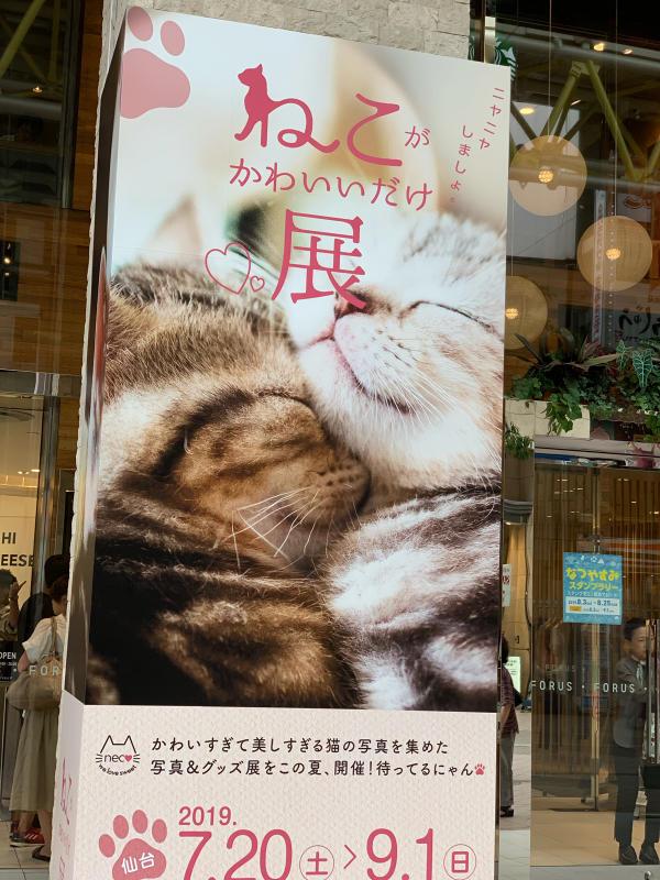 猫がかわいいだけ展に行ってきました。_e0411899_17110280.jpg