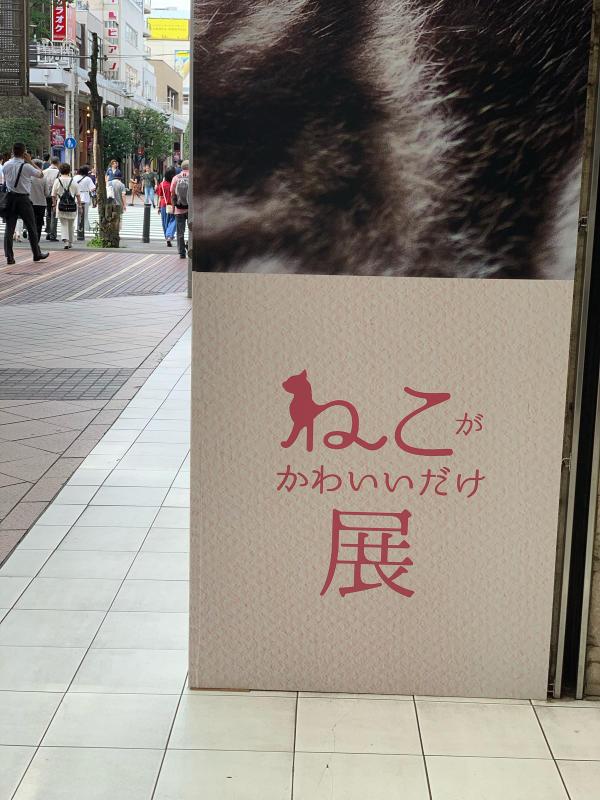 猫がかわいいだけ展に行ってきました。_e0411899_17110555.jpg