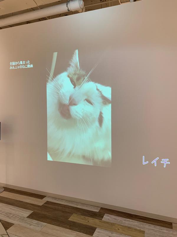 猫がかわいいだけ展に行ってきました。_e0411899_17562252.jpg