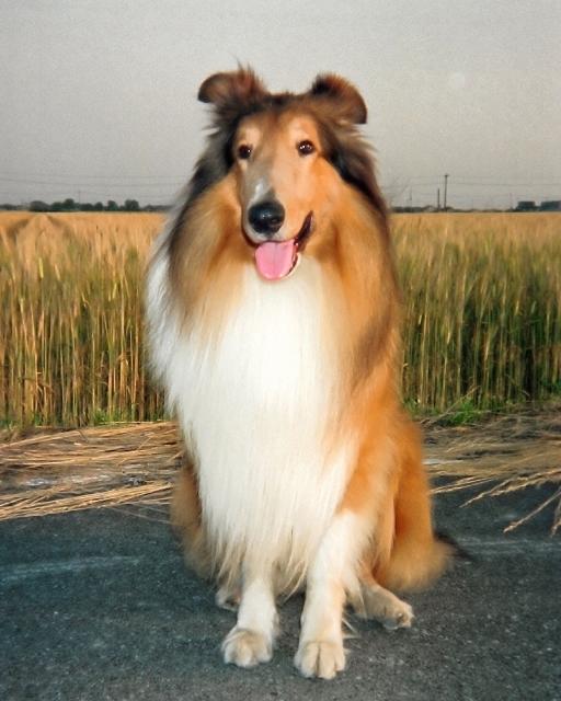コリー犬の森_b0203907_23130740.jpg