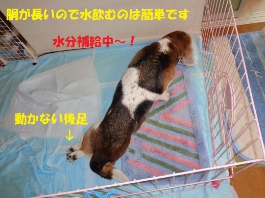 f0121712_16061275.jpg
