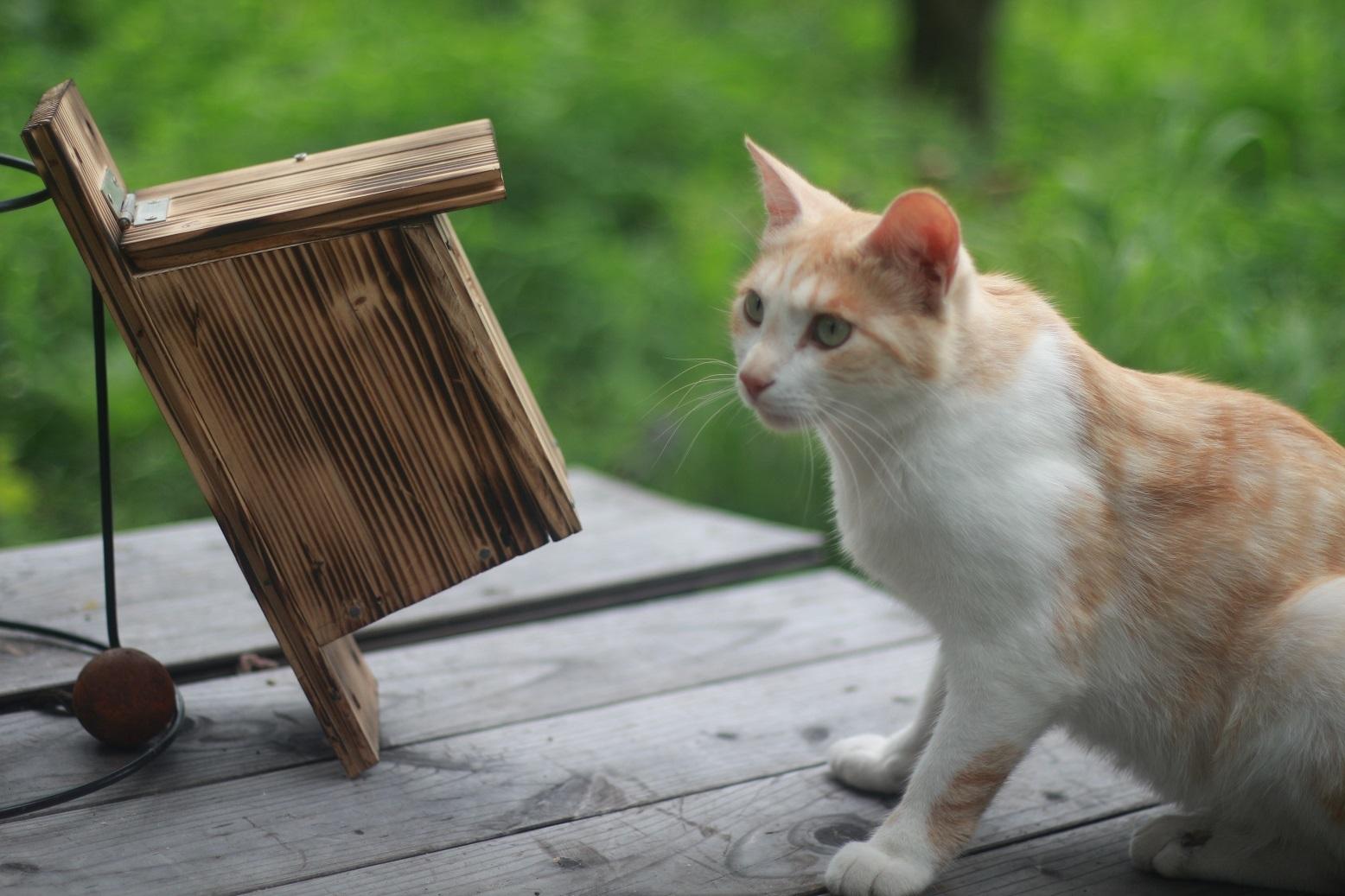 夏休みの工作 小鳥の巣箱作り_d0155147_11545916.jpg