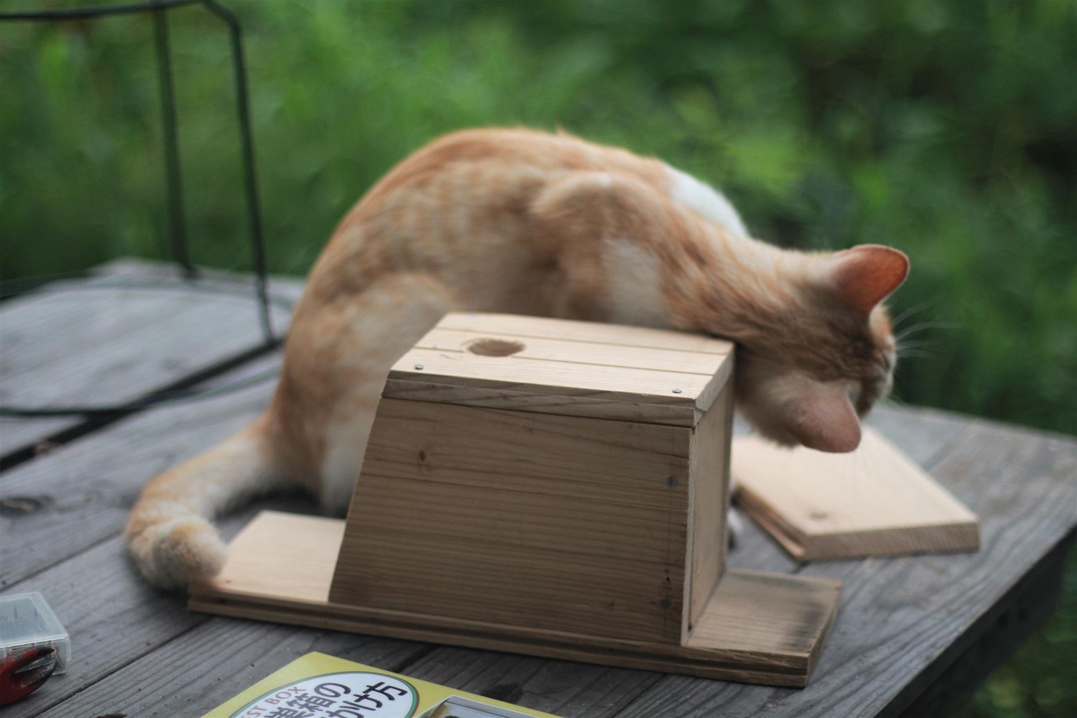 夏休みの工作 小鳥の巣箱作り_d0155147_11553651.jpg