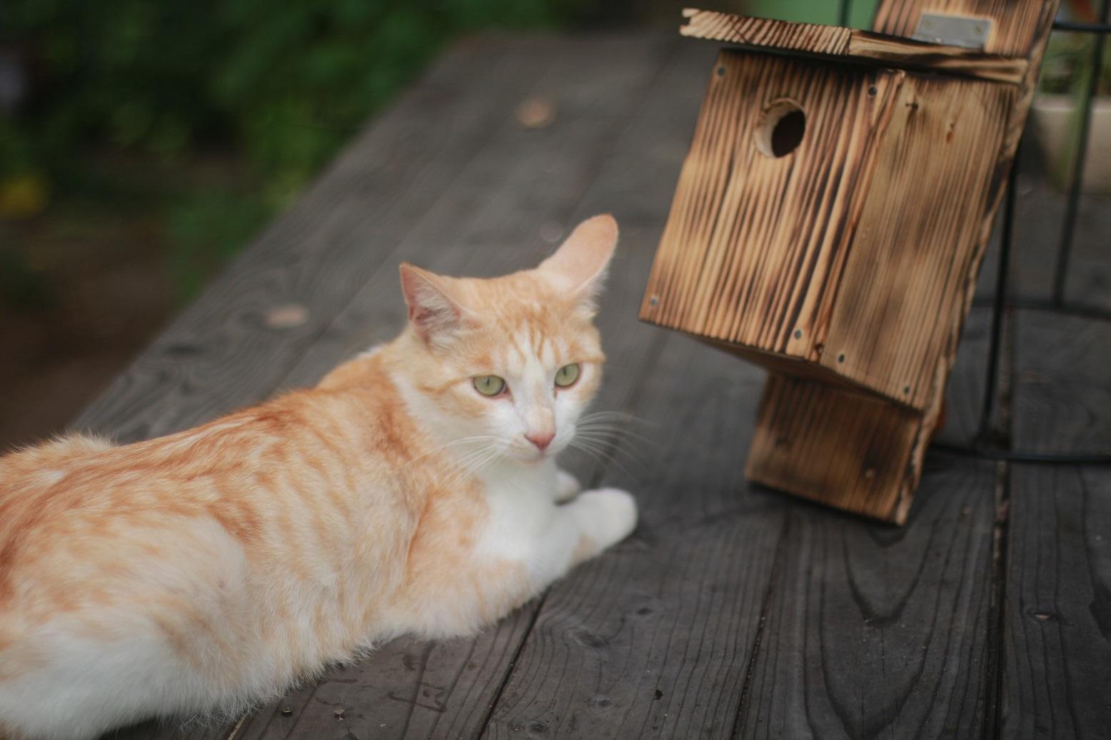 夏休みの工作 小鳥の巣箱作り_d0155147_11585943.jpg