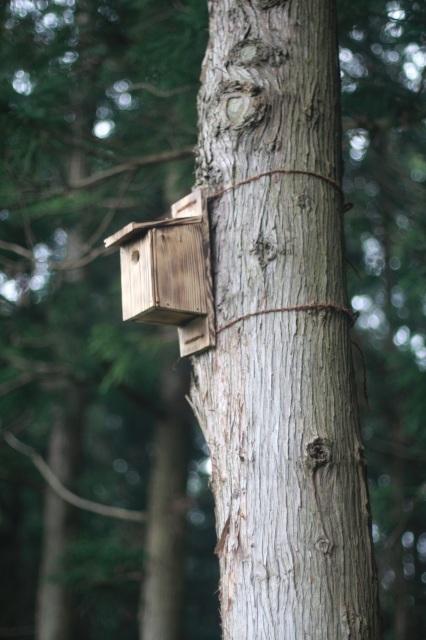 夏休みの工作 小鳥の巣箱作り_d0155147_11591612.jpg