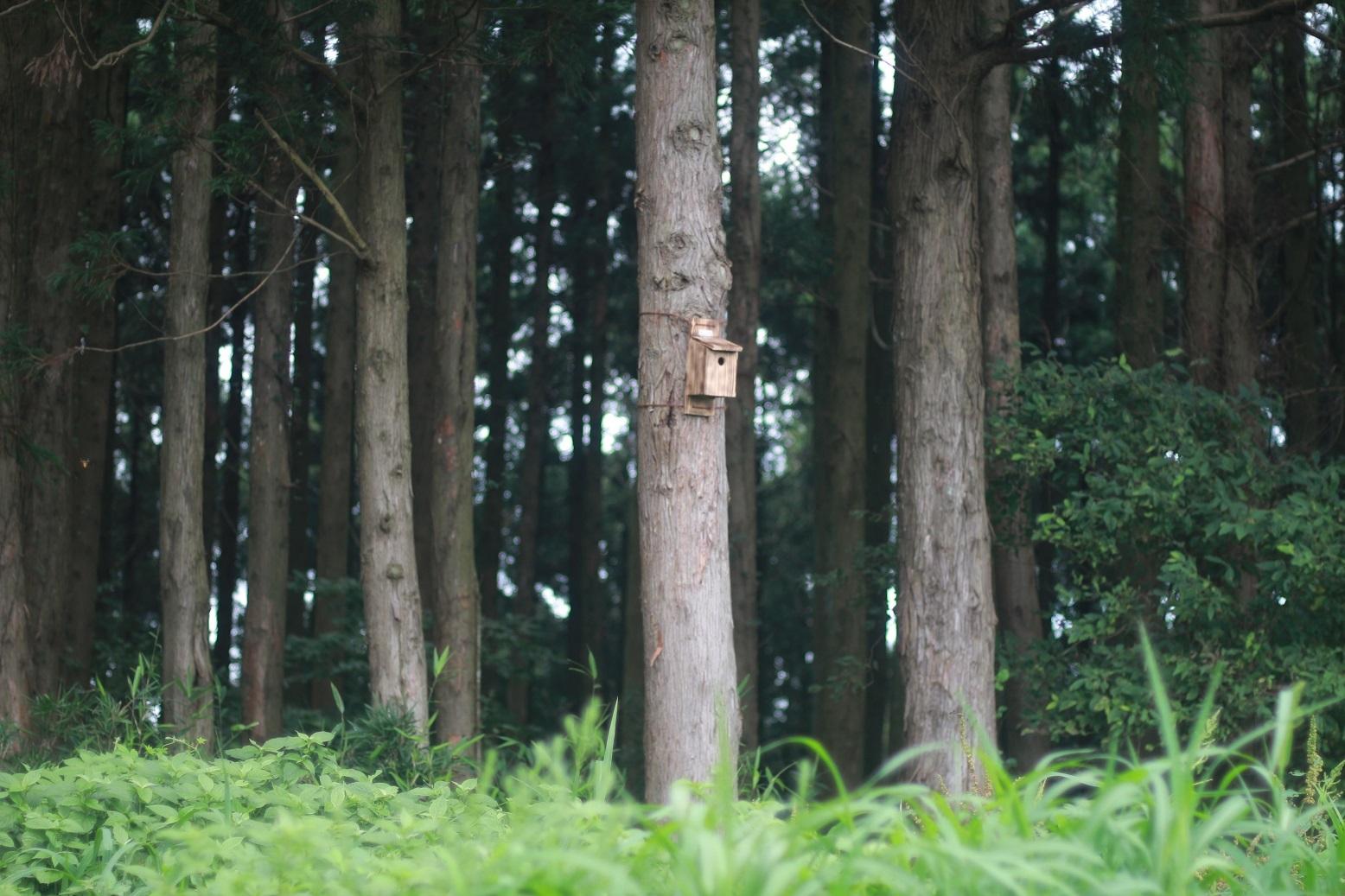 夏休みの工作 小鳥の巣箱作り_d0155147_11592986.jpg