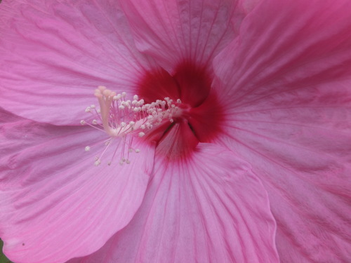 マイガーデン~夏の花たち_d0336460_00462185.jpg